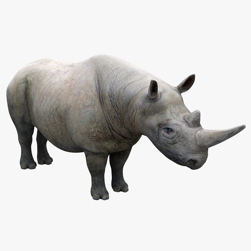 obj black rhinoceros