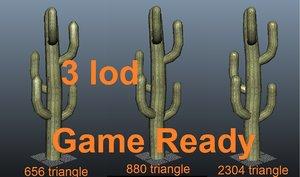 maya tall cactus ready