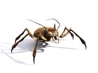 3d bug character model