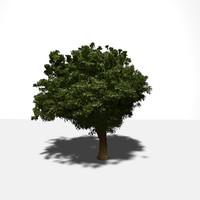 realistic tree 3d obj