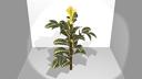 zebra plant 3D models