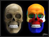 Human skull Vray