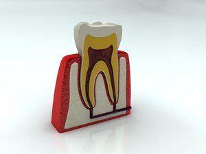 tooth 3d max
