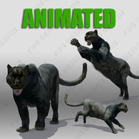 Panther Animated