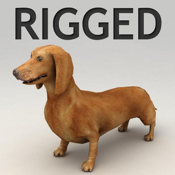 3d dachshund rigged biped