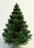 3d model picea spruce