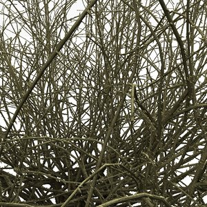 thorn prickle 3d max