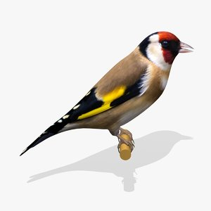 3ds goldfinch ab