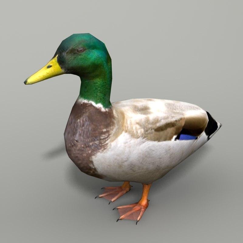 mallard duck max