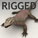 Monitor Lizard 3D models