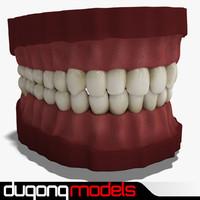 3d dugm01 teeth