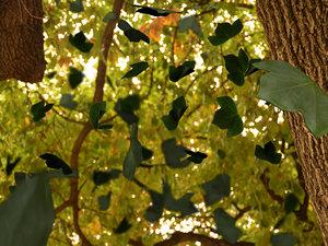 3d creeper trees model