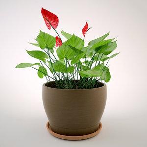 flower anturium max free