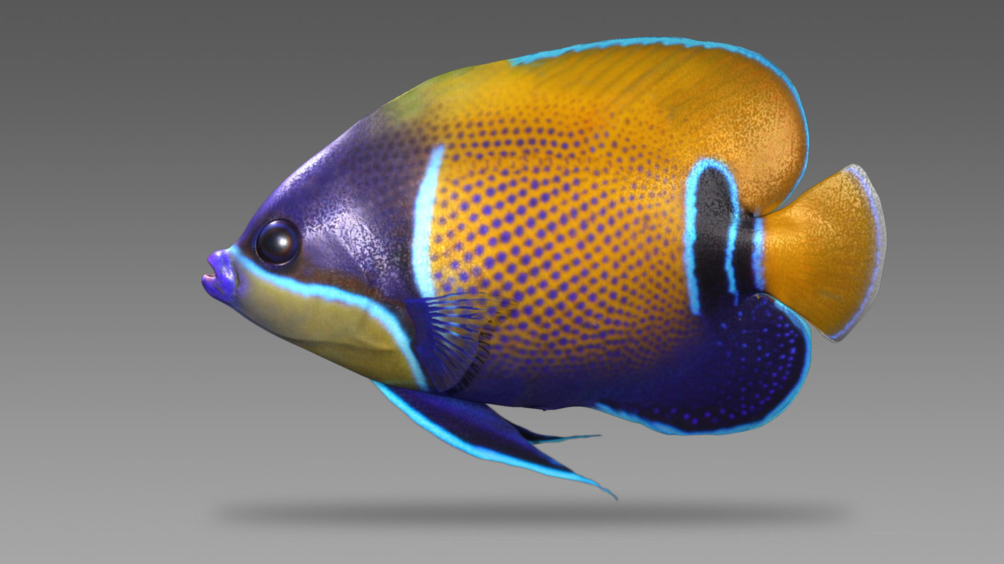 3d model saltwater fish majestic angelfish
