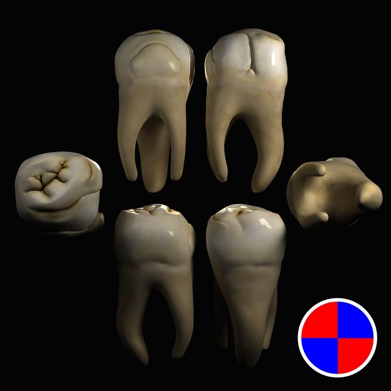 3d model maxillary molar