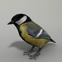 3d model tomtit tit yellow