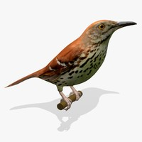 AB Brown Thrasher SA