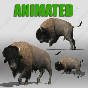 maya buffalo