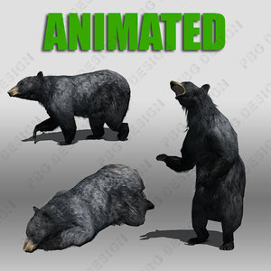 black bear animations 3d model