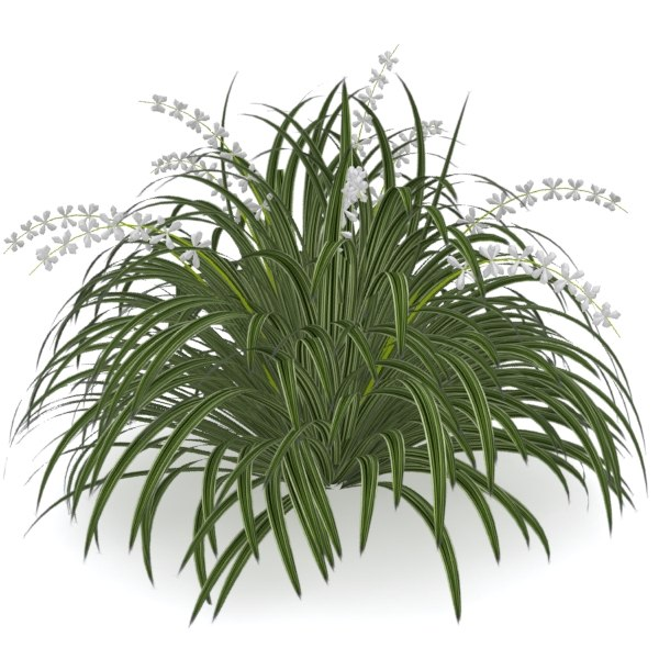 3ds Giant Planted Liriope