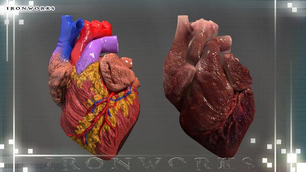 heart diagram 3d model
