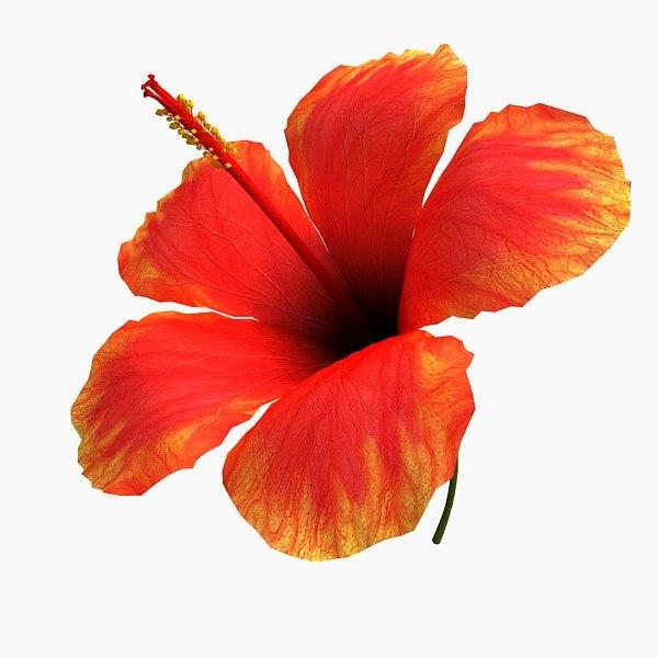 hibiscus flower max