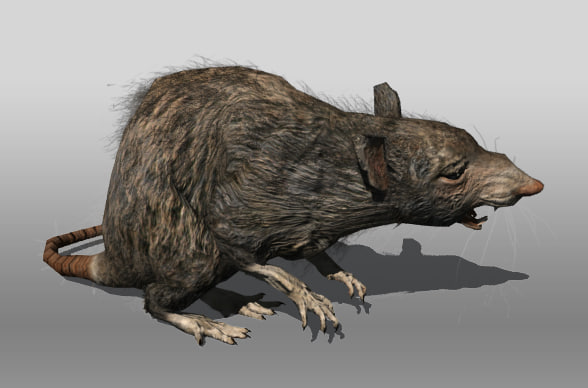 rat animations 3d 3ds