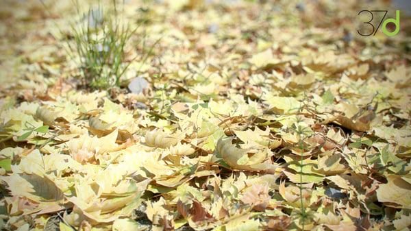 3ds fallen leaves photorealistic