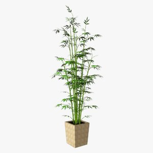 bamboo plant 3d max
