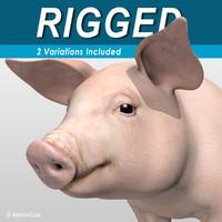 3d model animation pig