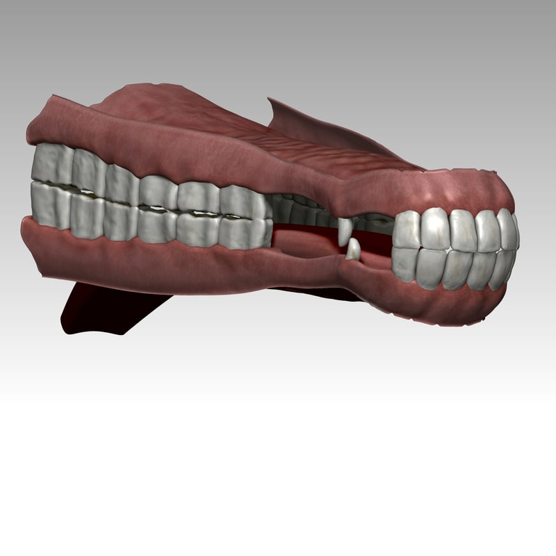 realistical horse mouth 3d 3ds