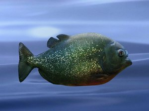 3d piranha model