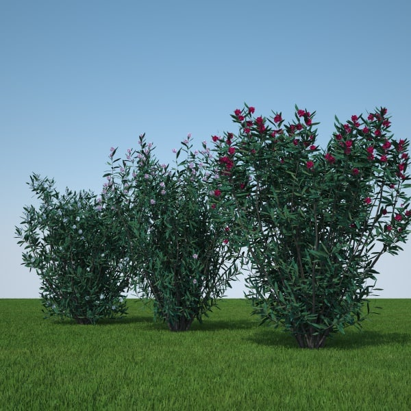 pack plants flowers 3d model