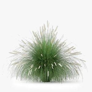 pennisetum alopecuroides 3d model