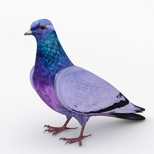 3d model dove