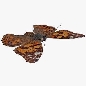 3d west coast lady butterfly