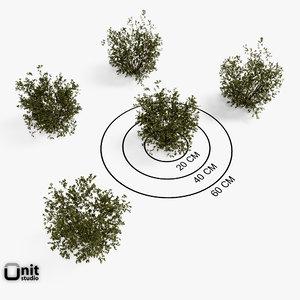 proxy set plant 3d max