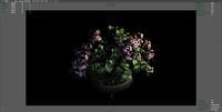 pelargonium plant flowers 3d obj