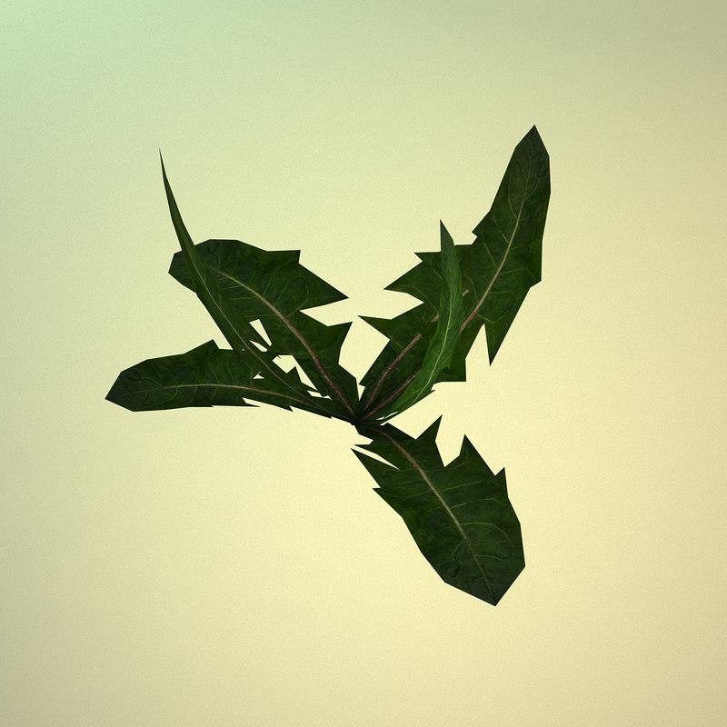 free dandelion plant 3d model