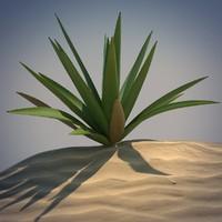 Desert Spikeplant