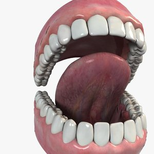 3d model mouth