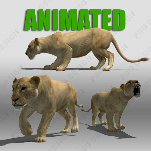3d lioness animations model