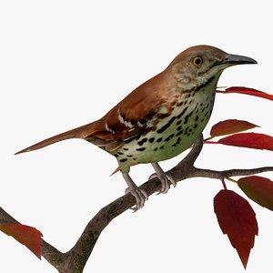 brown thrasher birds ab 3ds