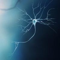 Neuron-Model