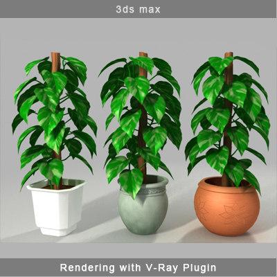 3d money plant model