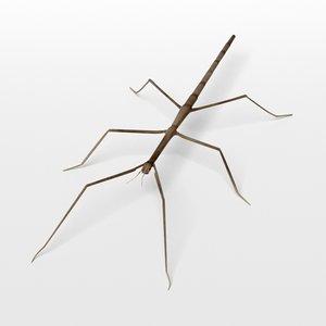 stick insect 3d obj