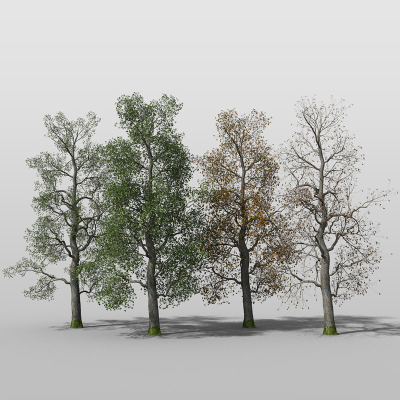 poplar tree gnarly 3d c4d