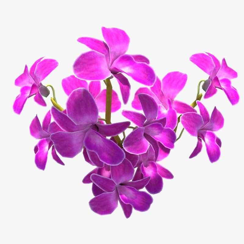 orchid flowers 3ds