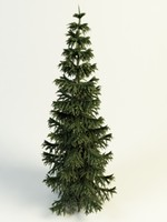 conifer tree 3d model