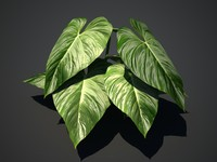3d model of tropical plant